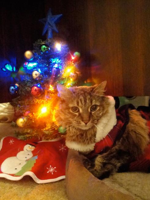 Christmas Irie